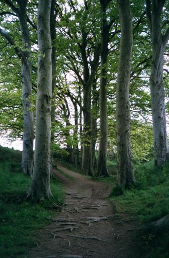 Silbury Hill Enchanged Path 2002