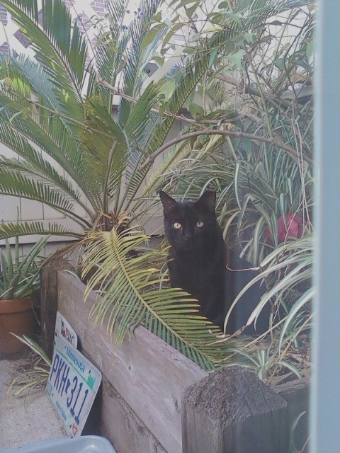 Onyx the Feral Cat 2.15.2014